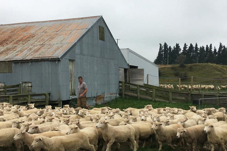 Mike Salvesen works in his yard on his farm at Mt Somers, outside Christchurch, New Zealand on March 20, 2019.