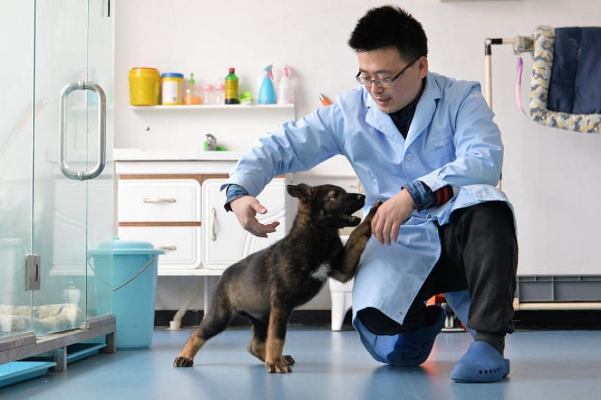 A researcher interacts with Kunxun, a dog cloned from a police dog.