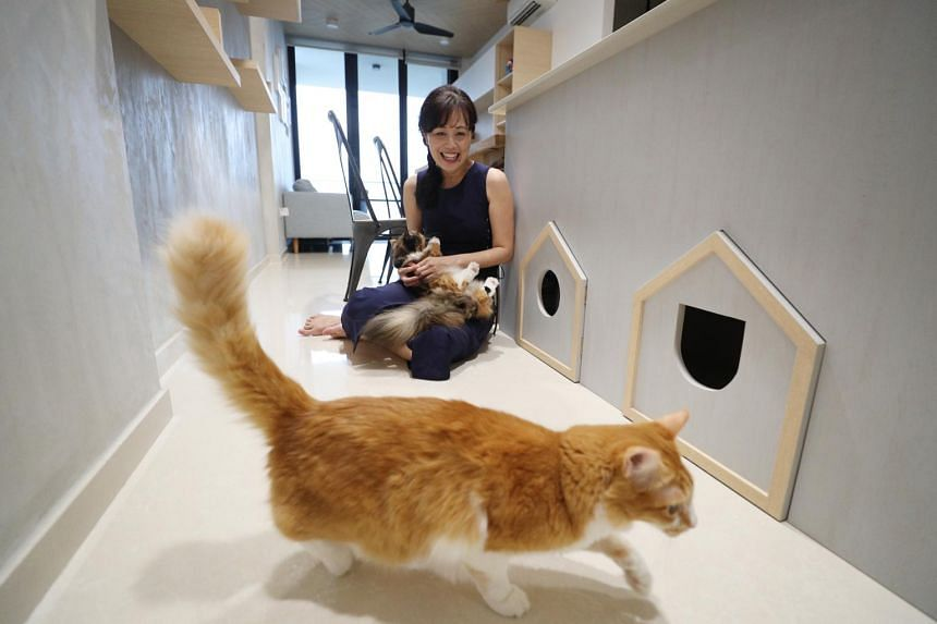"""Yvonne Chan poses with her cats Robin (front) and Pumpkin by a """"cat house"""" in her home, on March 21, 2019."""