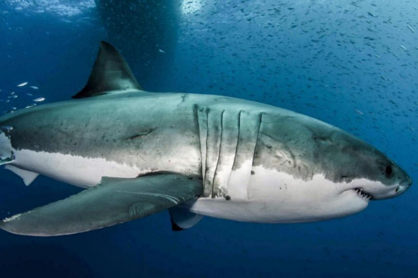 Seventeen of 58 shark species evaluated were classified as facing extinction.