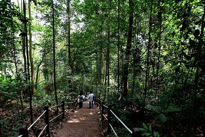 Singapore is already overcrowded, and people need space to unwind. Hikers find peace by hiking through forested trails.