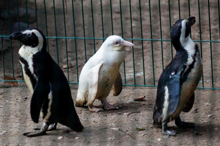The three-month-old does not have a name, as Gdansk Zoo does not yet know if it is male or female.