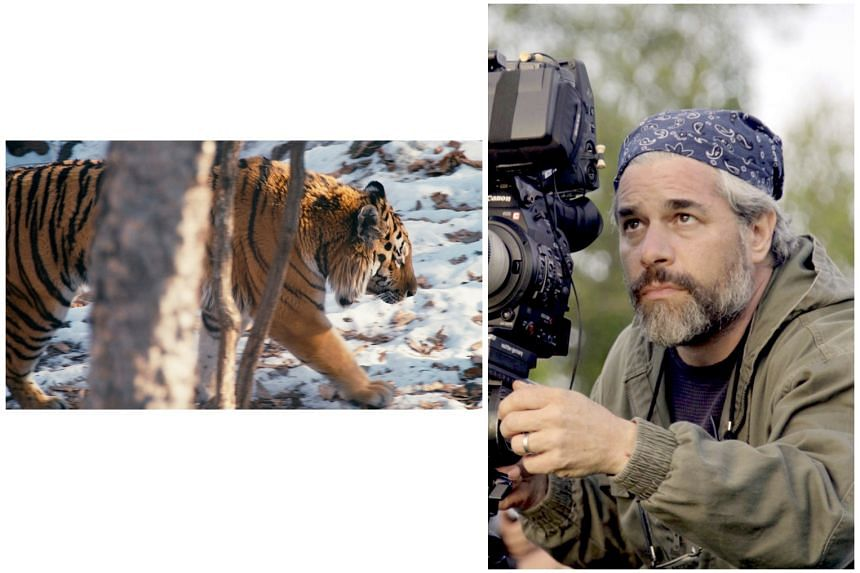 In his film Tigerland, documentarymaker Ross Kauffman (right) focuses on tigers living in the wild domains of the Russian Far East and India.