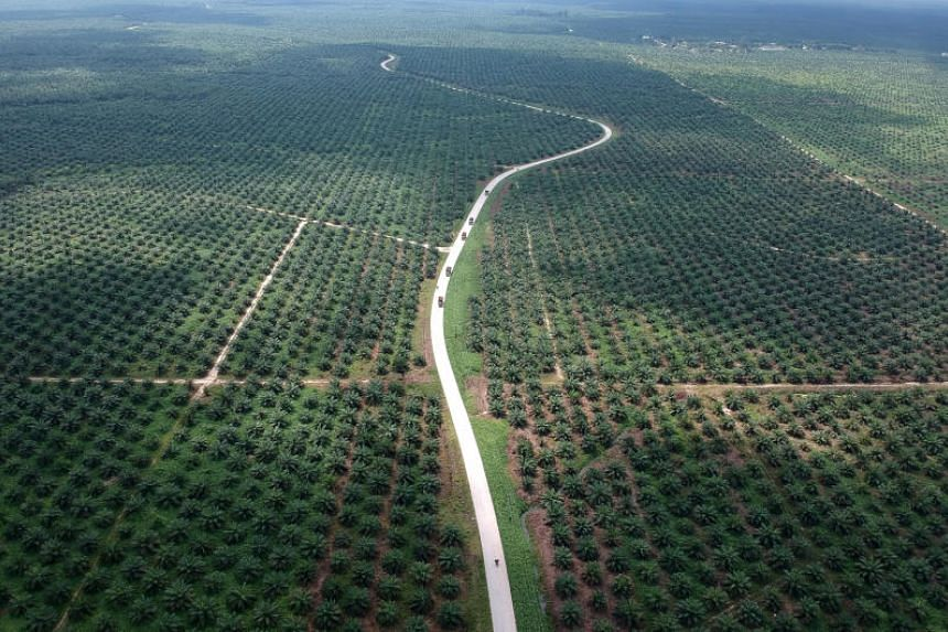 An aerial photo of a palm oil plantation in Sumatra island, Indonesia. Indonesia, the world's biggest palm oil producer, has lashed out at the EU after the bloc classified palm oil as a risky crop that caused significant deforestation and ruled that