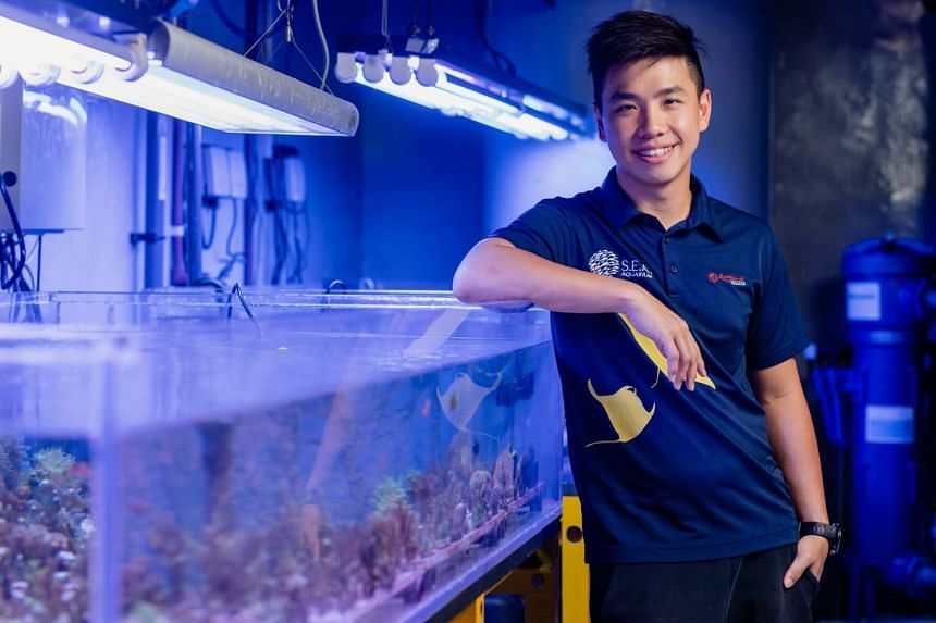 The Singapore campus of James Cook University let aquarist Delon Wee realise his dream of pursuing a career in marine biology. PHOTO: TED CHEN