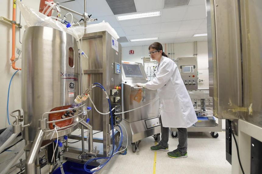 Leveraging its existing technology in bioproduction and stem cell bioengineering, A*Star's Bioprocessing Technology Institute is a first mover in culturing meat, and it is currently using Chinese hamster ovary cells in trials.