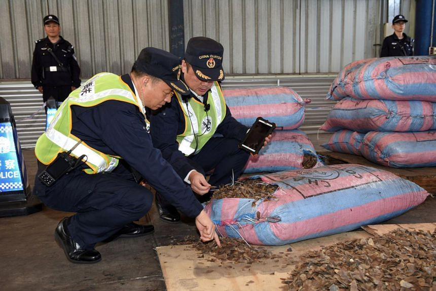 Chinese customs officials inspect scales of pangolins that were seized on a ship in Shenzhen, Guangdong province, China, on Nov 29, 2017.