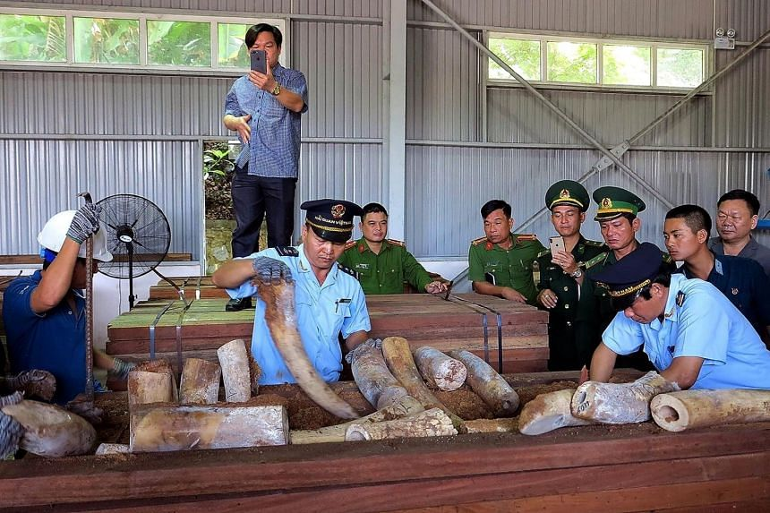 Vietnamese customs officials inspecting seized ivory inside a shipment at a warehouse in Danang, on March 28, 2019.