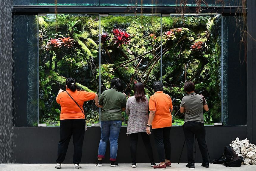 Suspended flowers create a canopy over visitors to Dance, the first garden landscape of Floral Fantasy. (Above) The Darth Vader Begonia is named after the iconic Star Wars villain. (Right) Float, another garden landscape. The 4m-wide, 2m-tall vivariu