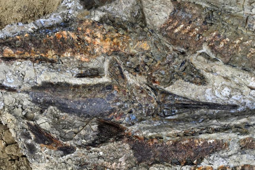 A tangled mass of fish from the deposit in North Dakota's Hell Creek formation.