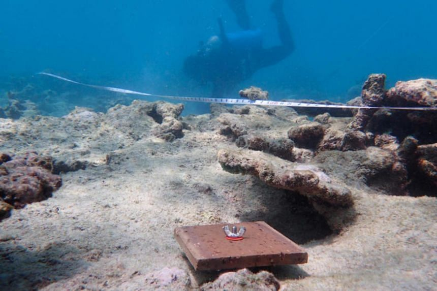 A recruitment tile is deployed on the Northern region of the Great Barrier Reef, the area which suffered the most severe bleaching during the 2016-2017 mass bleaching event.