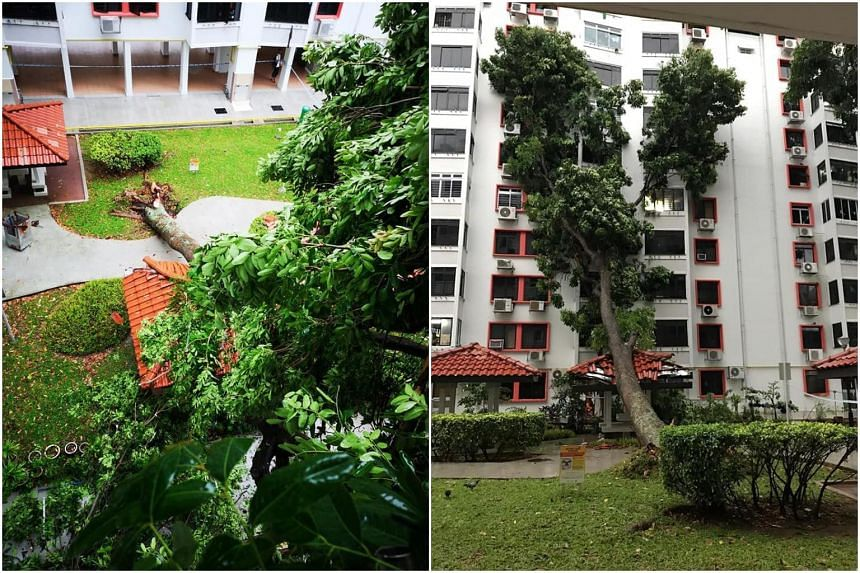 The tree, near Block 97 Jalan Dua, fell at around 5am amid a heavy downpour and strong winds across the island.