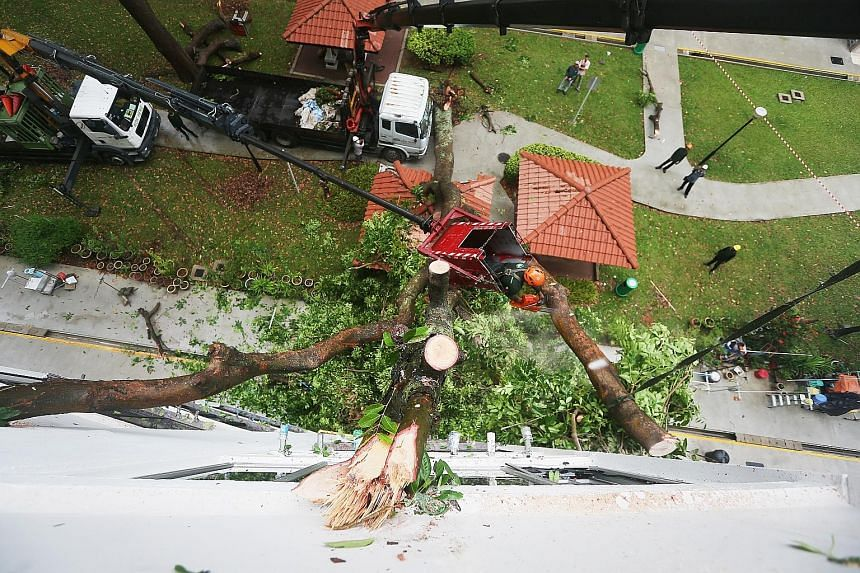 One of the shattered windows in Block 97 Jalan Dua. A resident also reported that his kitchen cabinet was damaged. The tree being removed by the Marine Parade Town Council's horticulture contractor. There were no reported injuries. Strong winds and h