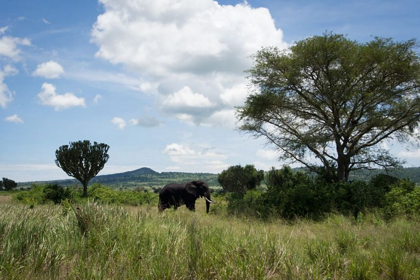 An elephant in Queen Elizabeth National Park, one of Uganda's most popular safari destinations.