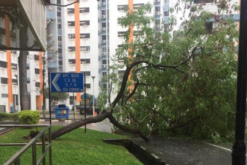The tree near Block 11A Pine Close fell with a loud thud at about 4.30pm on April 4, 2019, residents said.