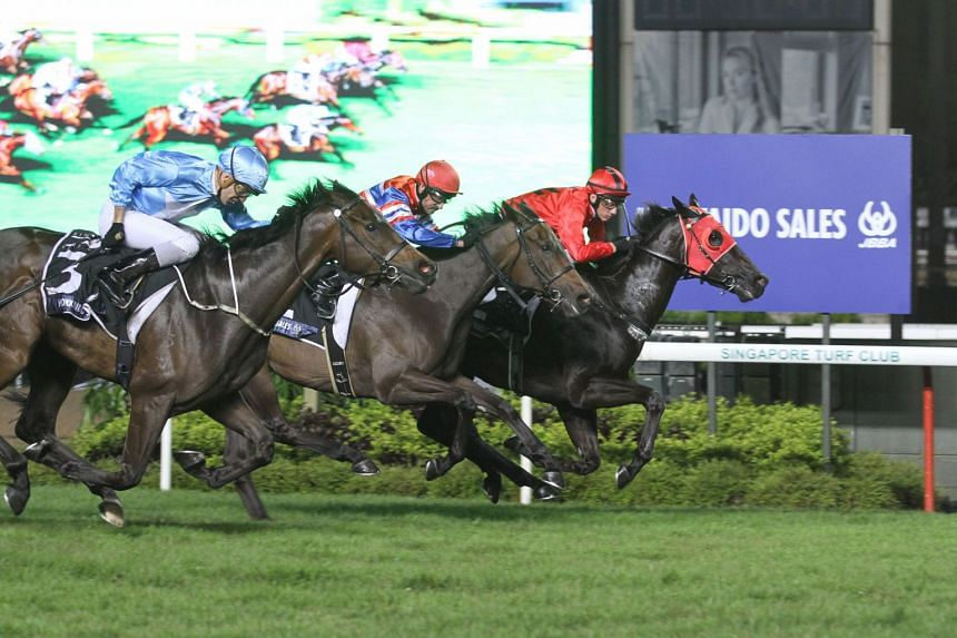 The Shane Baertschigertrained Bold Thruster holding on tenaciously to beat the Michael Clements-trained pair of Top Knight (outside) and Siam Vipasiri (centre) in last night's $175,000 Group 3 JBBA Singapore Three Year-Old Sprint over 1,200m at Kranji.