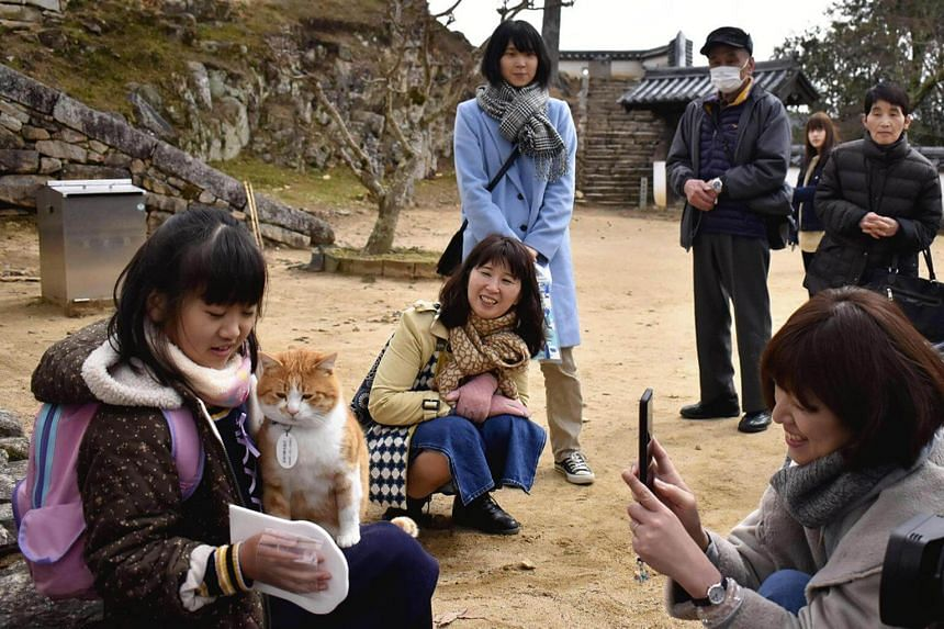 """Sanjuro, the cat """"lord"""" of Bitchu Matsuyama Castle, drew social media attention due to his friendly attitude towards people."""