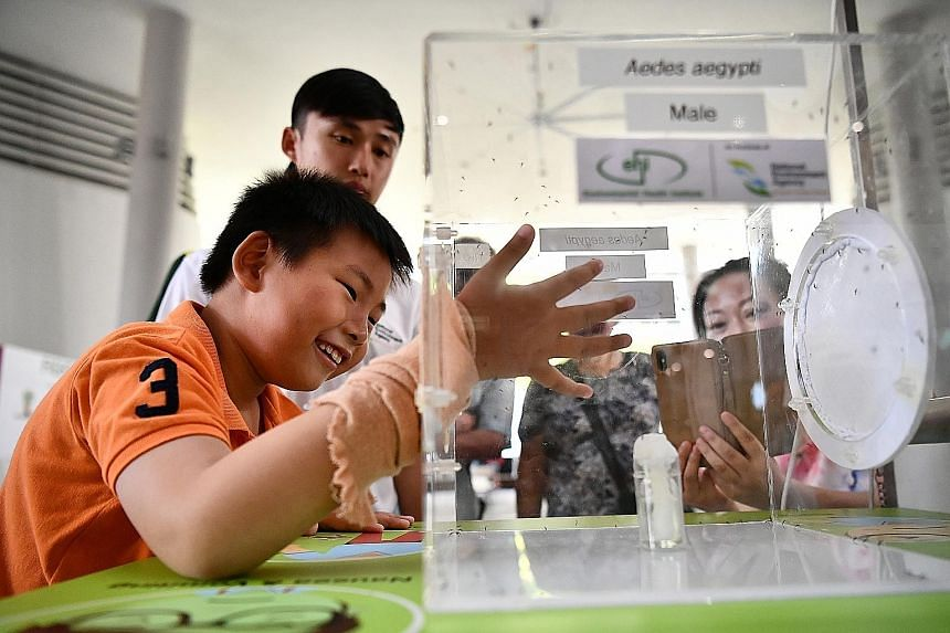 Eight-year-old Lee Jia Hao putting his hand into a box containing male Aedes aegypti mosquitoes which do not bite, at a booth at the launch of the dengue prevention campaign yesterday. Sterile male mosquitoes are released under Project Wolbachia to c