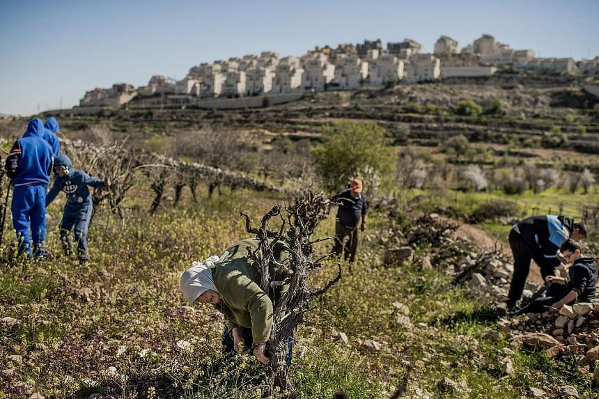 Palestinians working on a vineyard in the West Bank, with an Israeli settlement in the background. Israeli Prime Minister Benjamin Netanyahu's comments come just days before a closely fought election tomorrow and could be seen as an appeal to right-w