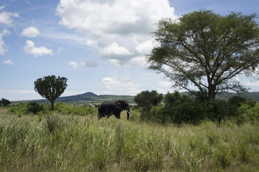 Four kidnappers stopped a group of tourists at gunpoint in the Queen Elizabeth National Park.