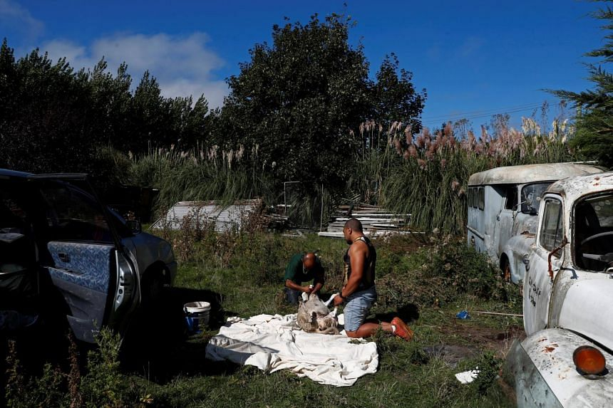 Omar Nabi and his friend Apa slaughter a sheep to offer as a sacrifice for his late father Haji-Daoud Nabi, at his father's property in Christchurch, New Zealand, on March 31, 2019.