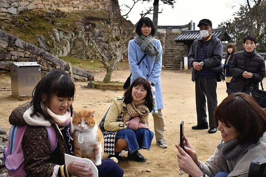 Tourists interacting with Sanjuro the cat on the grounds of Bitchu Matsuyama Castle in Takahashi, Okayama prefecture, last month.