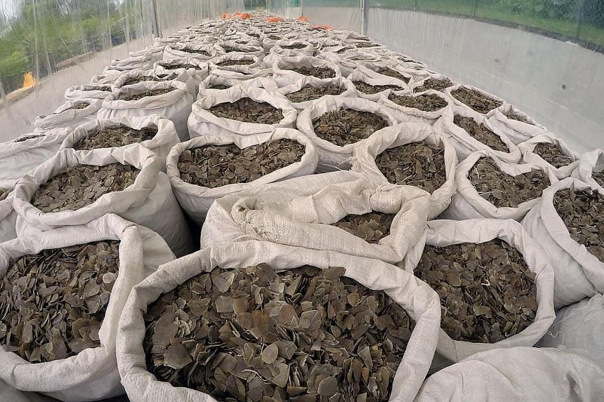 About 12.7 tonnes of pangolin scales, which are in high demand for use in traditional Chinese medicine, were seized by the authorities on Monday at the Pasir Panjang Scanning Station.