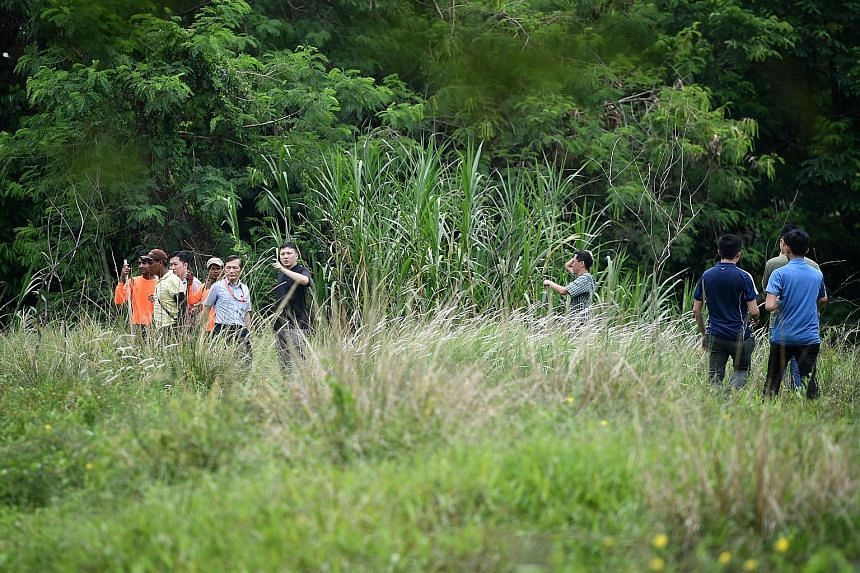 Clockwise from left: A search party looking for the missing bull, called Ganesha, on the premises of Viknesh Dairy Farm in Lim Chu Kang yesterday; the facade of the farm; and other cattle kept there. The missing bull is one of a herd of 36 at the far