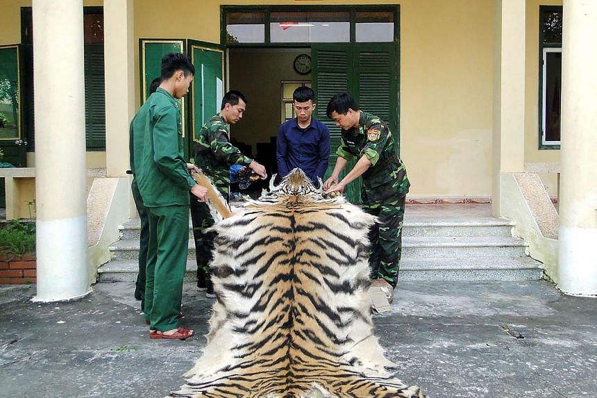 Vietnamese Border Patrol officials holding a confiscated tiger skin and bones while the suspect Pham Van Hiep (second from right) looks on at a Border Guard station in northern Vietnam's Quang Ninh province.
