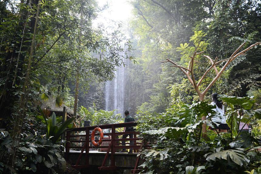 Jurong Falls located inside an aviary at the Jurong Bird Park.