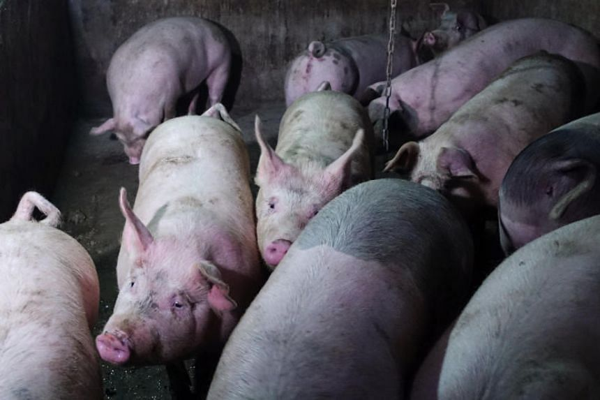 The announcement comes as many in the industry say the spread of swine fever there is much worse than authorities have reported.