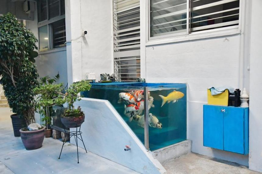 A Housing Board flat owner who had converted the doorstep of his property into a fish tank for his koi carp recently failed in his appeal to keep the unusual structure.