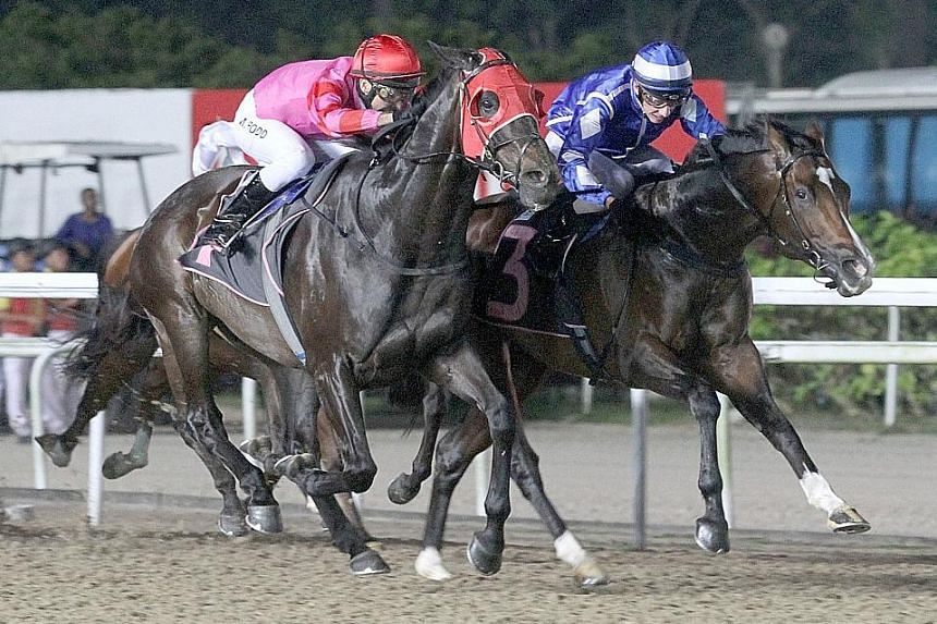 The Shane Baertschiger-trained favourite Mikki Joy (right) holding off stablemate Blue Swede in The New Paper Cup race over the Polytrack 1,600m in Race 7 at Kranji last night.