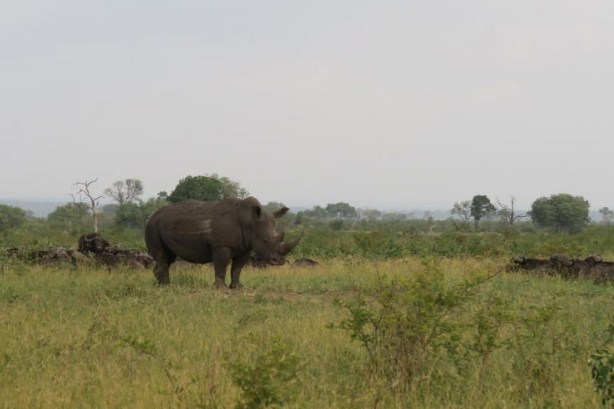 Poachers who enter a park in South Africa are typically after rhinoceros' horns, which can sell for tens of thousands of dollars per kilogramme.