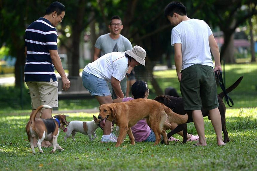Dog owners who wish to purchase the plans must ensure that their canines are registered with the Animal & Veterinary Service.