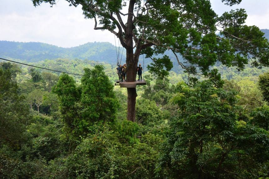 """Zip line operator Flight of the Gibbon markets itself as being """"one of the longest single zip lines in Asia"""", and having the """"highest safety standards"""" in the region."""