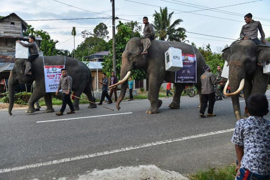 Indonesian mahouts ride elephants transporting election materials to a polling station in Trumon, Southern Aceh province.