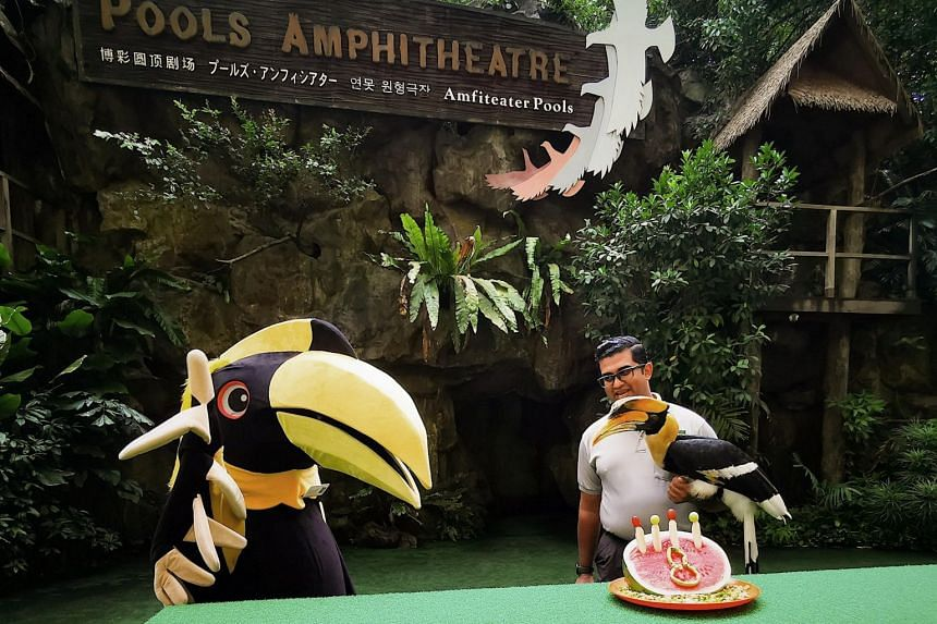 Sunny the hornbill will be on stage together with a Sunny mascot at the 11am High Flyers show at Jurong Bird Park on April 20, 2019, in a special birthday celebration.