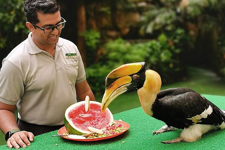 Sunny the hornbill (above) was named Jurong Bird Park's icon in 2016 to represent the threatened species and raise awareness of the hornbill ivory trade.