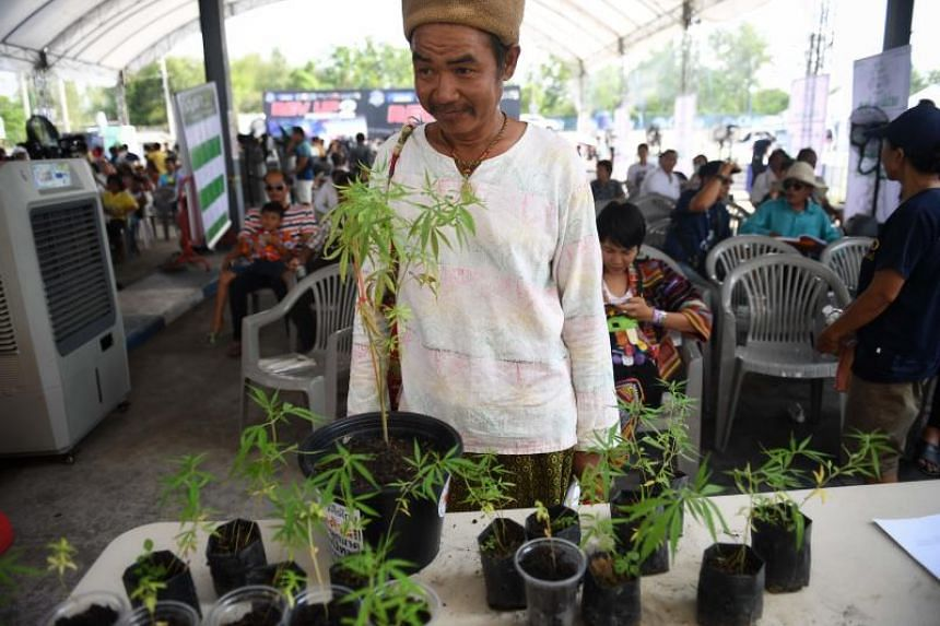 A man waits to register his prescriptions for medicinal cannabis oil during the second day of the inaugural Pan Ram weed festival in the Thai north-eastern province of Buriram on April 20, 2019.