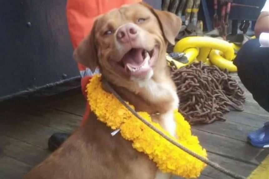 Boonrod will enjoy a new life, as the Chevron worker who rescued him has decided to adopt him.