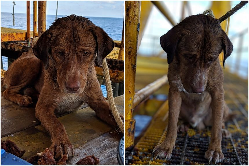 Sad-eyed dog gets his own Facebook page after Gulf of Thailand rescue