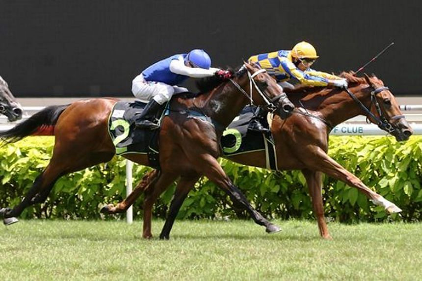Easy Does It (yellow cap) making a dream debut on Oct 15, 2017. The chestnut gelding seems to have come back good from a tendon injury.