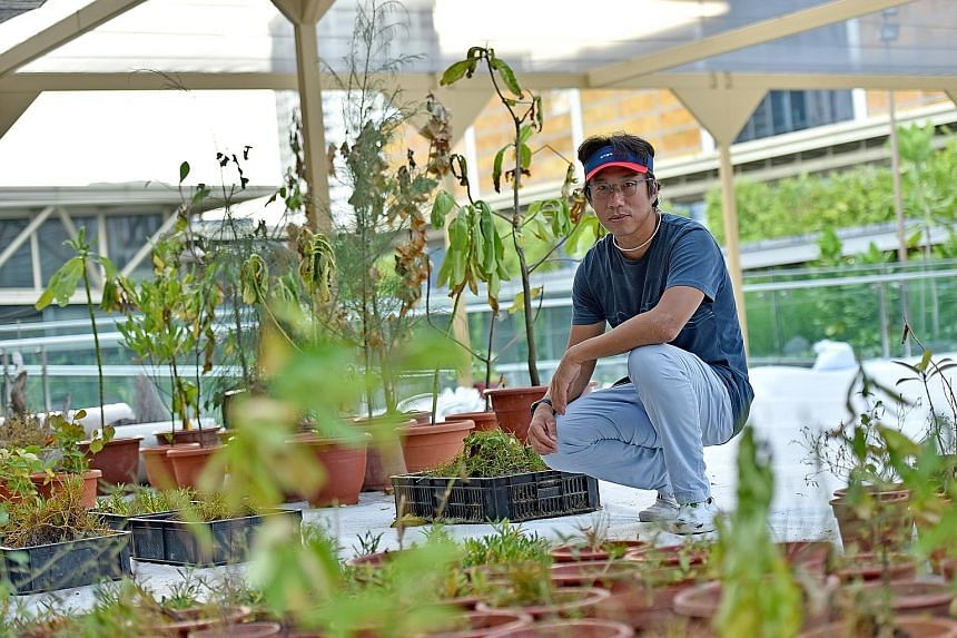 """In his """"ongoing experiment"""", artist Charles Lim replaces the hedges and ornamental plants at National Gallery Singapore's roof garden with lesser-known species found in Changi, Tuas and the Southern Islands."""