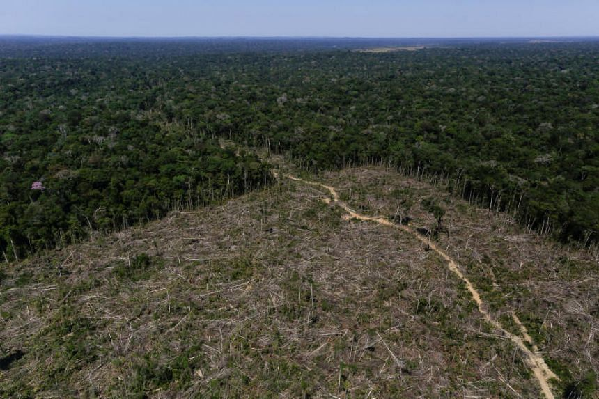 """Deforested land as a result of """"Operation Green Wave"""" conducted by agents of the Brazilian Institute for the Environment and Renewable Natural Resources, or Ibama, to combat illegal logging in Apui, in the southern region of the state of Amazonas, Br"""