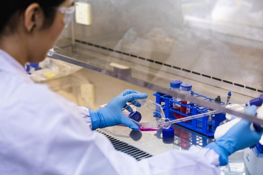 In a lab at research hub Biopolis, shrimp stem cells are kept swimming in a pink nutrient solution.