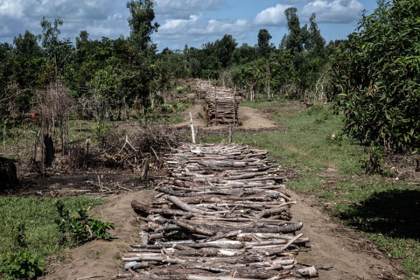 Stacks of hardwood near Antalaha, in Madagascar's northeastern Sava region, on May 30, 2018.  Madagascar lost 2 per cent of its entire rainforest in 2018.