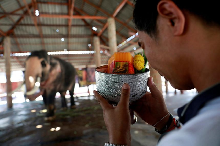 A man makes an offering to Plai Ekachai, 33, who will become first white elephant to be discovered under the reign of King Rama X, in Maha Sarakham, Thailand, on April 25, 2019.