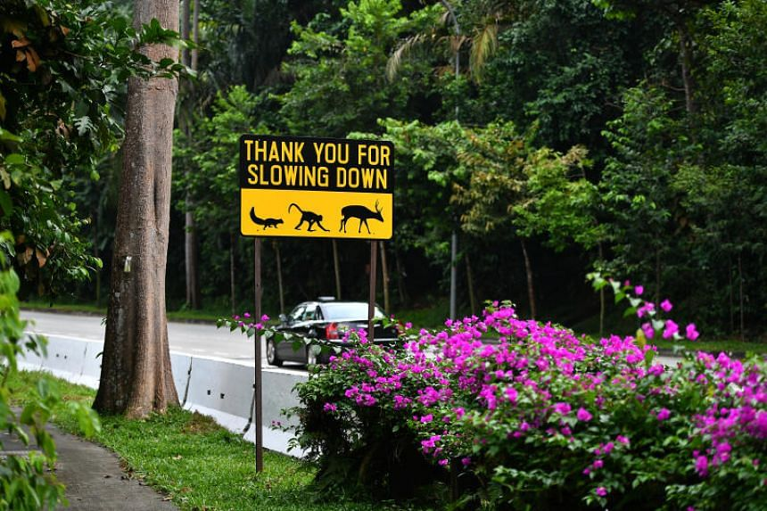 The proposed changes also expand the obligations of motorists to stop in the event of an accident involving an animal, if it is reasonably believed that it has an owner or if it poses a road safety hazard to others.