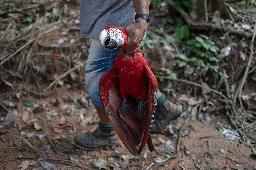 An indigenous man with a red macaw that he killed in Para state in Brazil, home to the lush Amazon rainforest.